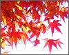 今年も紅葉の見ごろを迎え、にぎわいを見せた京都。境内約2,000本のもみじがあるといわれている、通天橋で有名な「東福寺」に紅葉狩りへ。